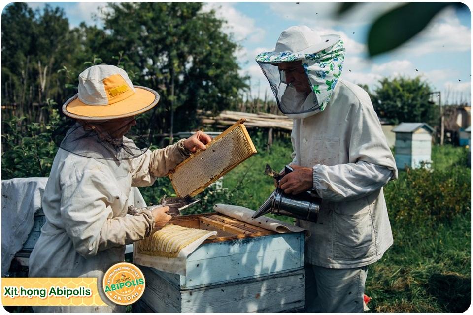 Keo ong chứa nhiều công dụng quý đối với việc chăm sóc sức khỏe